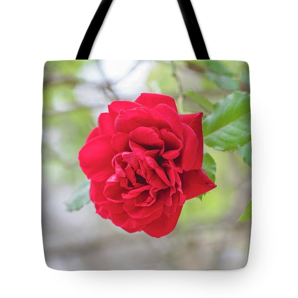 Tote Bag featuring the photograph Happy Red Flower by Raphael Lopez