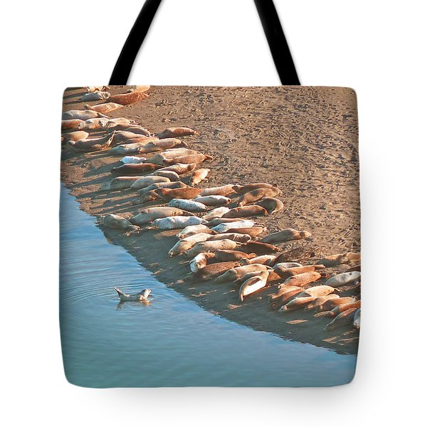 Harbor Seal Conductor Tote Bag