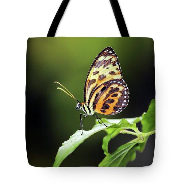 Harmonia Tiger Wing Tote Bag