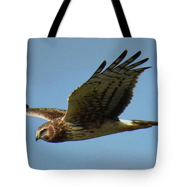 Tote Bag featuring the photograph Harrier In Flight by Sally Sperry