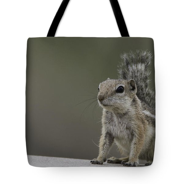 Tote Bag featuring the photograph Harris Antelope Squirrel by Anne Rodkin