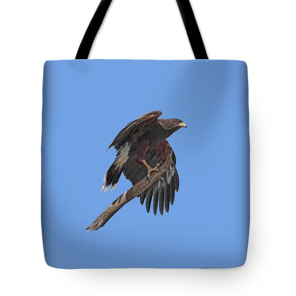 Harris Hawk - Transparent Tote Bag