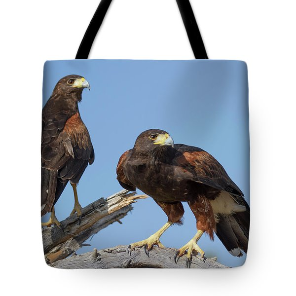 Tote Bag featuring the photograph Harris Hawks by Elvira Butler