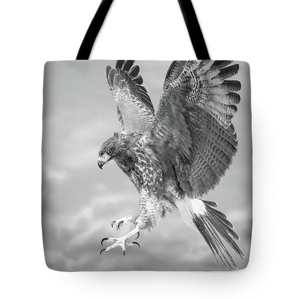 Harris's Hawk Tote Bag