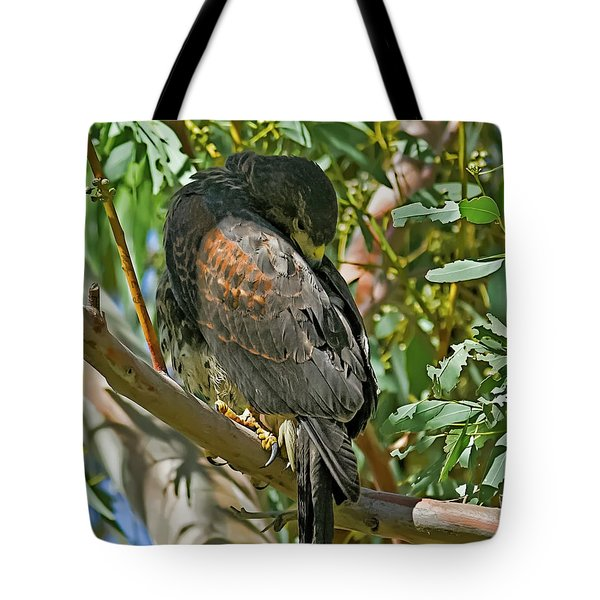 Tote Bag featuring the photograph Harris's Preening V09 by Mark Myhaver
