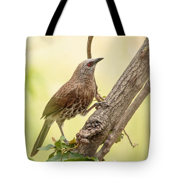Tote Bag featuring the photograph Hartlaub's Babbler - Craterope De Hartlaub - Turdoides Hartlaubii by Nature and Wildlife Photography