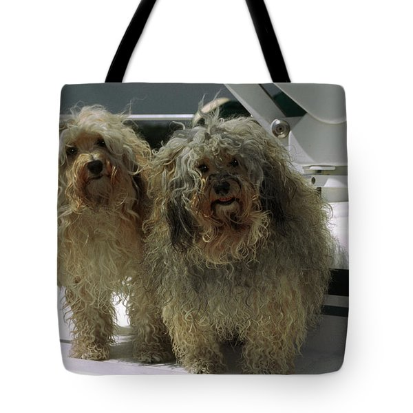 Havanese Dogs Tote Bag by Sally Weigand