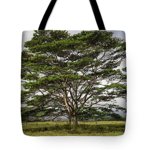 Hawaiian Moluccan Albizia Tree Tote Bag