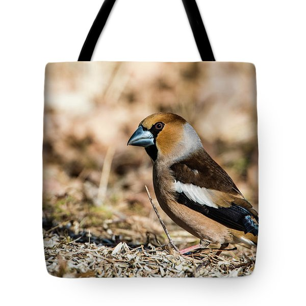 Tote Bag featuring the photograph Hawfinch's Gaze by Torbjorn Swenelius