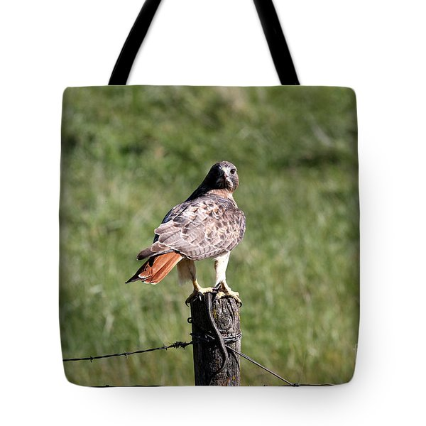Hawk And Snake Tote Bag