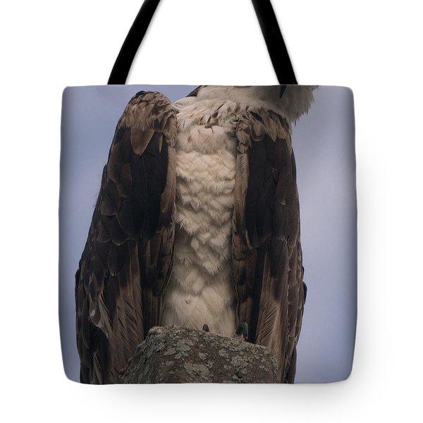 Hawk Attitude Tote Bag