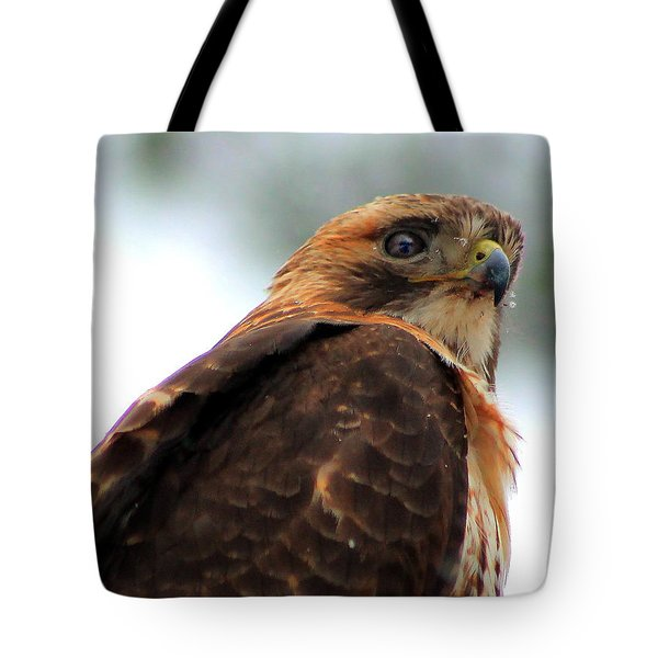 Hawk Tote Bag by Bruce Patrick Smith