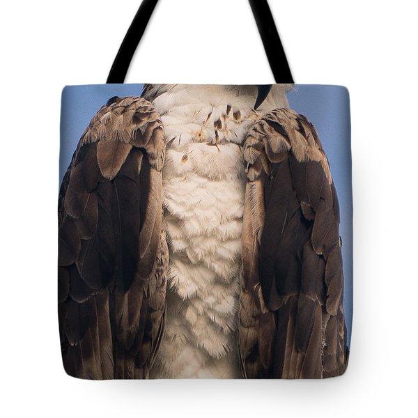 Hawk Glare Tote Bag
