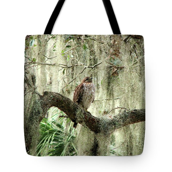Hawk In Live Oak Hammock Tote Bag