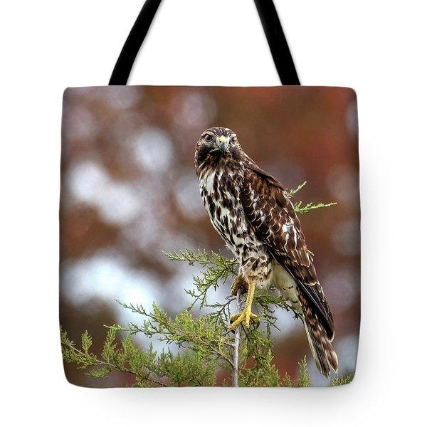 Red Shoulder Hawk Looking At Me Tote Bag