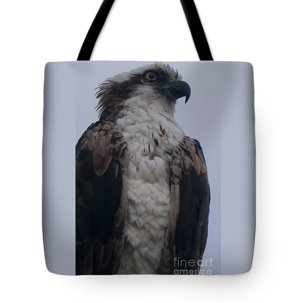 Hawk Looking Into The Distance Tote Bag