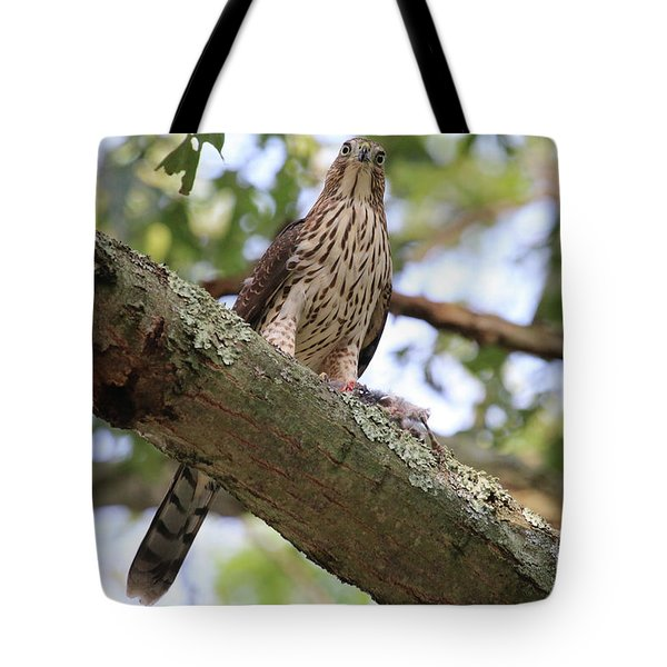 Hawk On A Branch Tote Bag