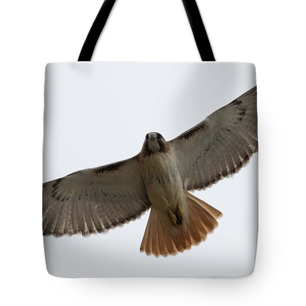 Hawk Overhead Tote Bag