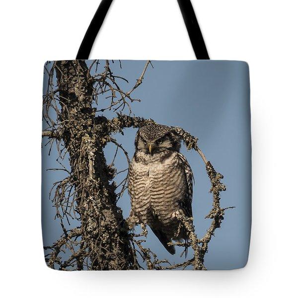 Hawk Owl Gaze Tote Bag