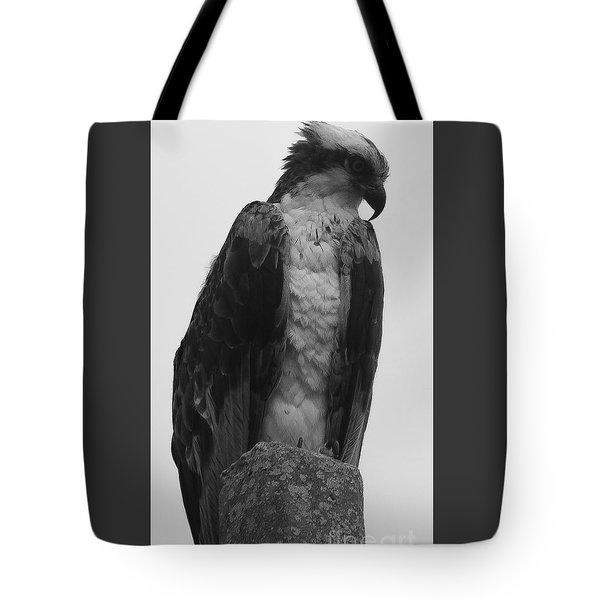 Hawk Perched Tote Bag