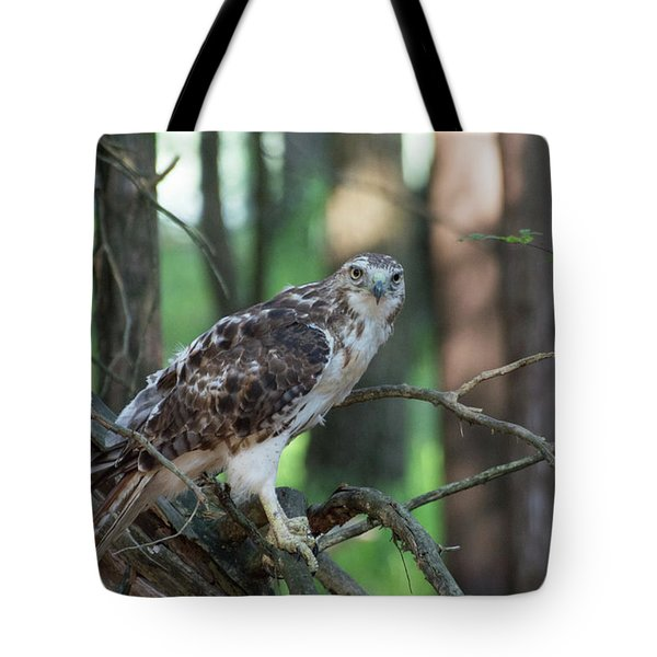 Hawk Portrait Tote Bag