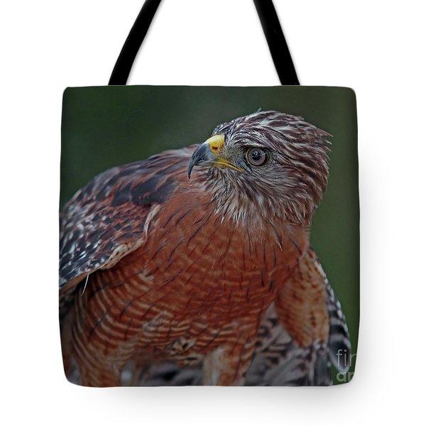 Hawk Portrait Tote Bag by Larry Nieland