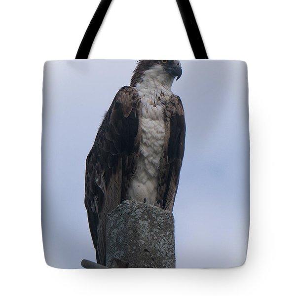 Hawk Pose Tote Bag