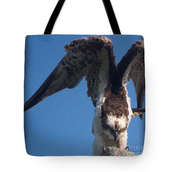 Hawk Prepares For Flight Tote Bag