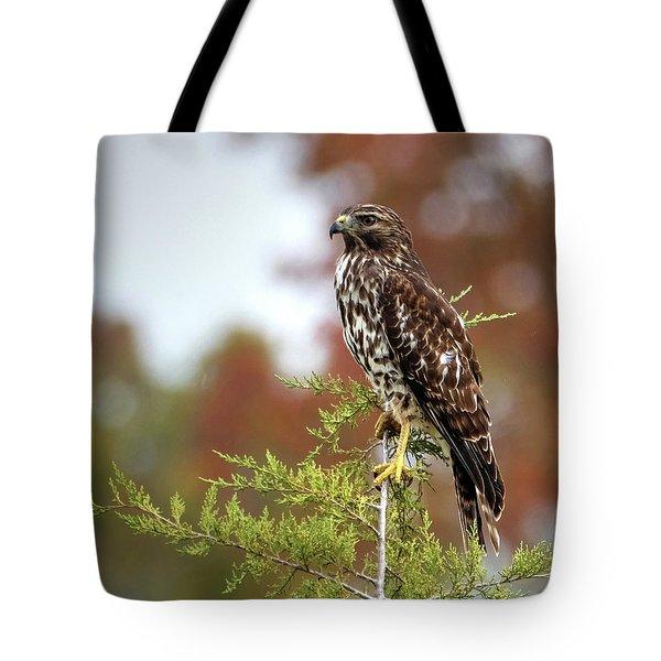 Red Shoulder Hawk Profile Tote Bag