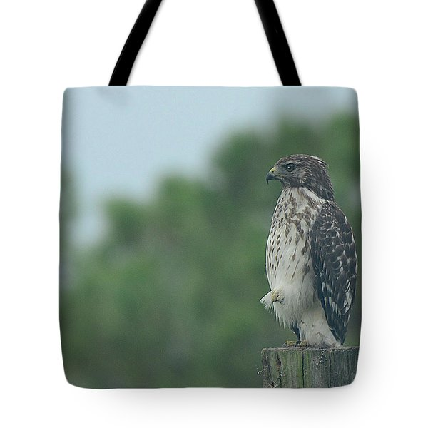 Hawk Resting A Leg Tote Bag