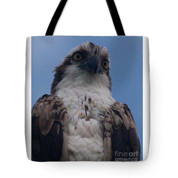 Hawk Stare Tote Bag