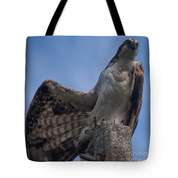 Hawk Stretching Tote Bag