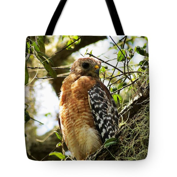 Hawk Taking A Rest On A Tree In Lakeland Florida Tote Bag
