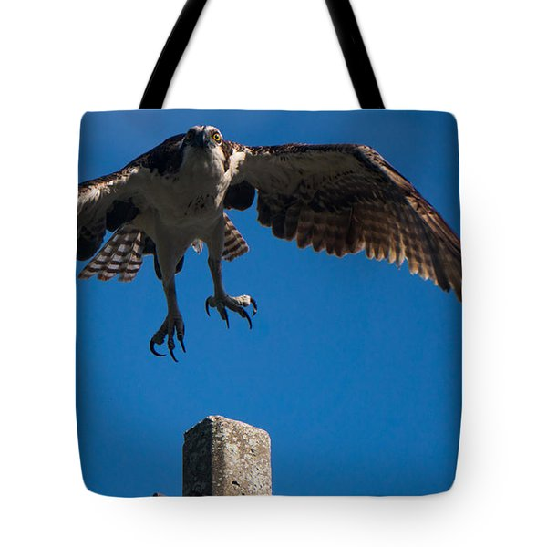 Hawk Taking Off Tote Bag