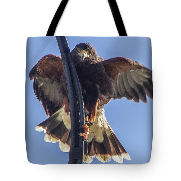 Tote Bag featuring the photograph Hawk Watch 6 by Phyllis Spoor