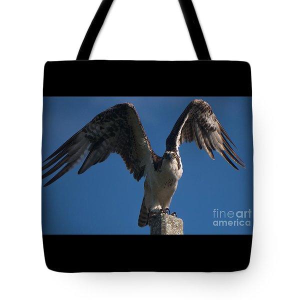 Hawk Wings Tote Bag