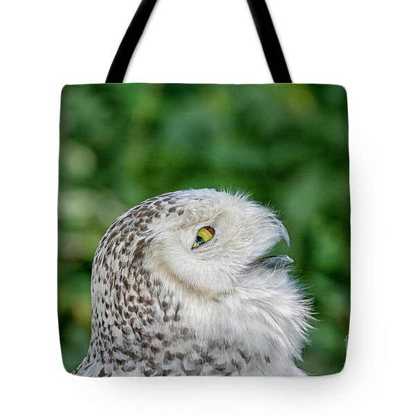 Head Of Snowy Owl Tote Bag