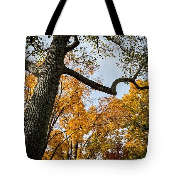 Heart Of Fall Tote Bag by Glenn DiPaola