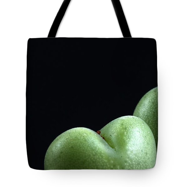 Tote Bag featuring the photograph Heart Shaped Lithops by Catherine Lau