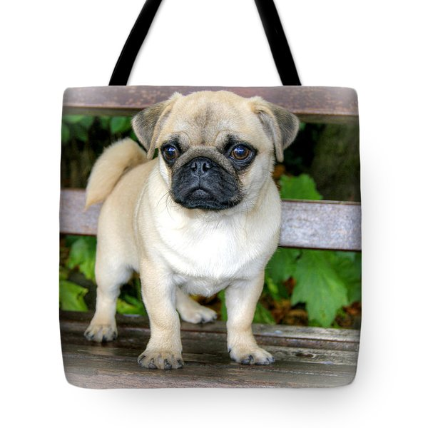 Tote Bag featuring the photograph Heathcliff The Pug by David Birchall