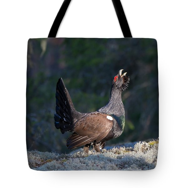 Heather Cock In The Morning Sun Tote Bag