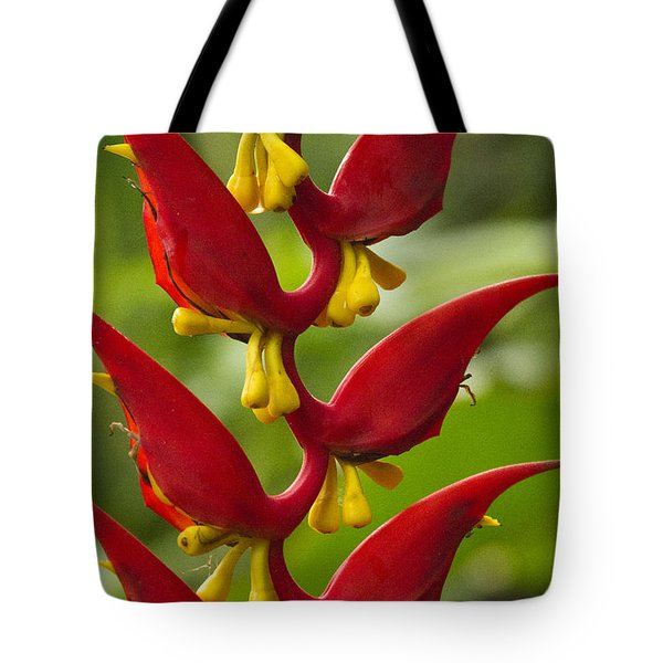 Heliconia Dielsiana Tote Bag by Heiko Koehrer-Wagner