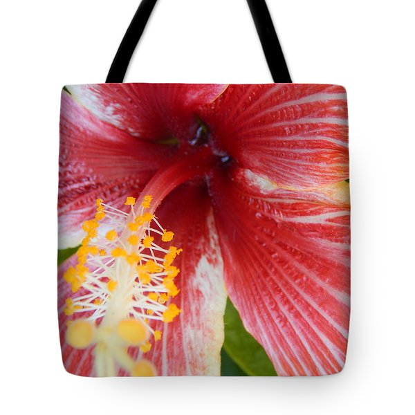 Tote Bag featuring the photograph Hello Flower Stem by Amanda Eberly-Kudamik