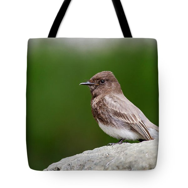 Black Phoebe Tote Bag