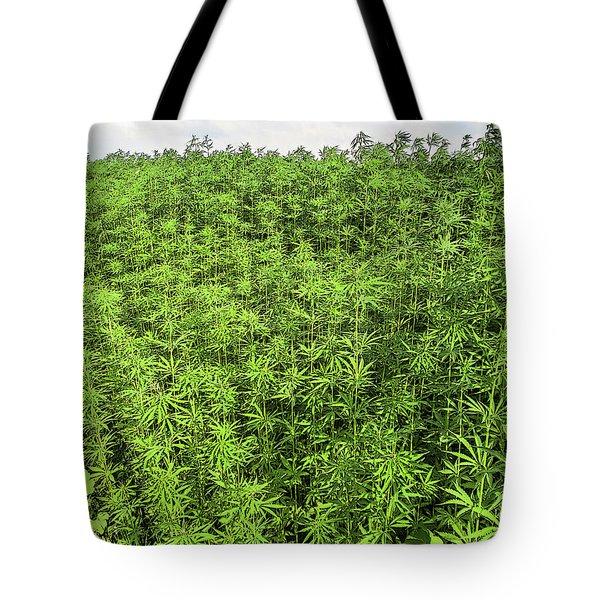 Hemp Plantation Tote Bag