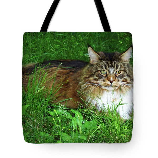 Tote Bag featuring the photograph Hercules Maine Coon Elegance by Roger Bester