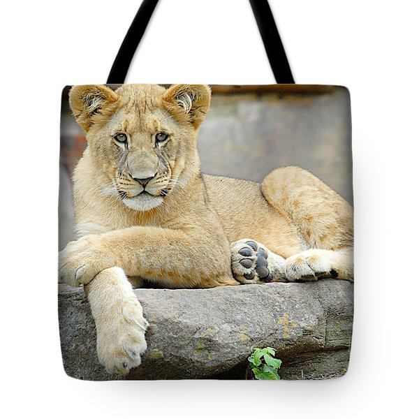 Here Kitty Kitty Tote Bag by Dyle   Warren