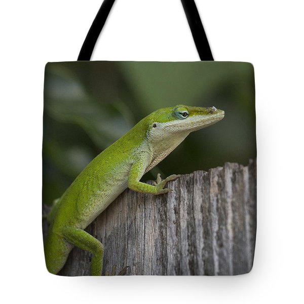 Here Lizard Lizard Lizard Tote Bag by D Wallace