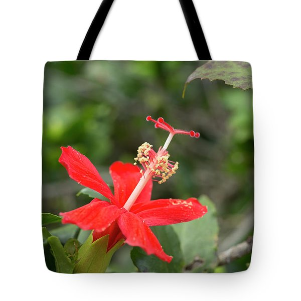 Tote Bag featuring the photograph Hibiscus Kokio Ula Ula by Charmian Vistaunet