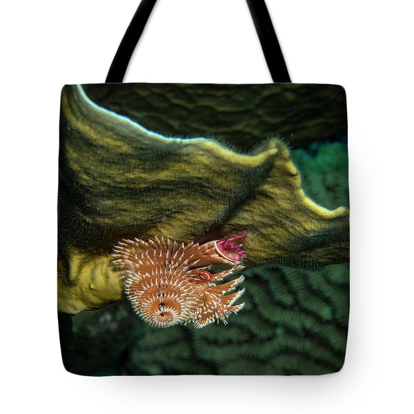 Tote Bag featuring the photograph Hidden Christmastree Worm by Jean Noren
